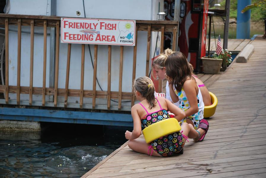 Friendly fish in need of feeding will keep the kids entertained