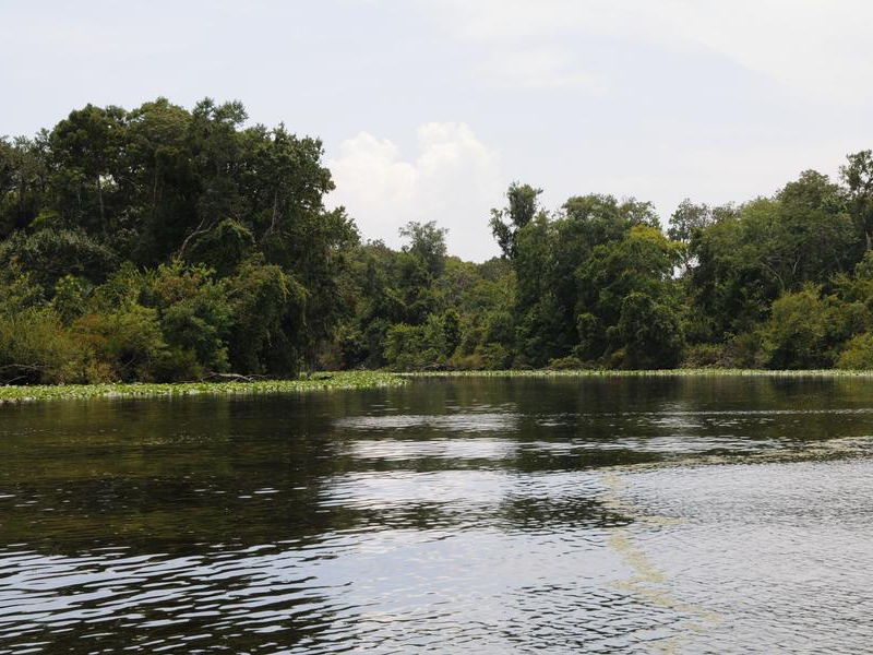 Cruise the lush edges of the St Johns River at a relaxing speed Photos