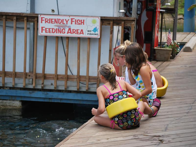 Friendly fish in need of feeding will keep the kids entertained Photos