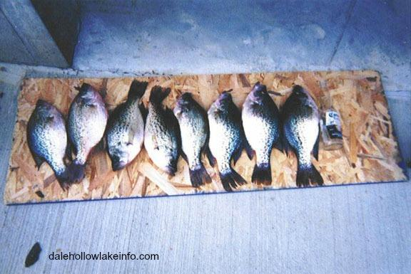 Dale hollow lake a tennessee treasure for Dale hollow lake fishing report